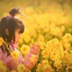 菜の花と少女