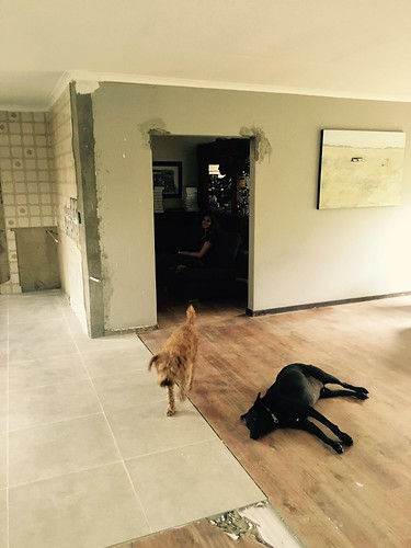 Kitchen renovation: dogs are now used to the space | by olafmeister