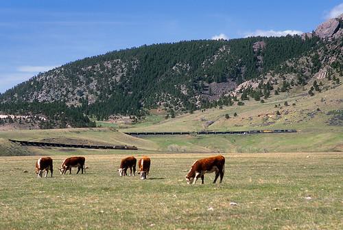 railroad up train colorado cattle clay sp co unionpacific locomotive ge southernpacific coaltrain dpu ac4400cw big10curve upmoffattunnelsubdivision