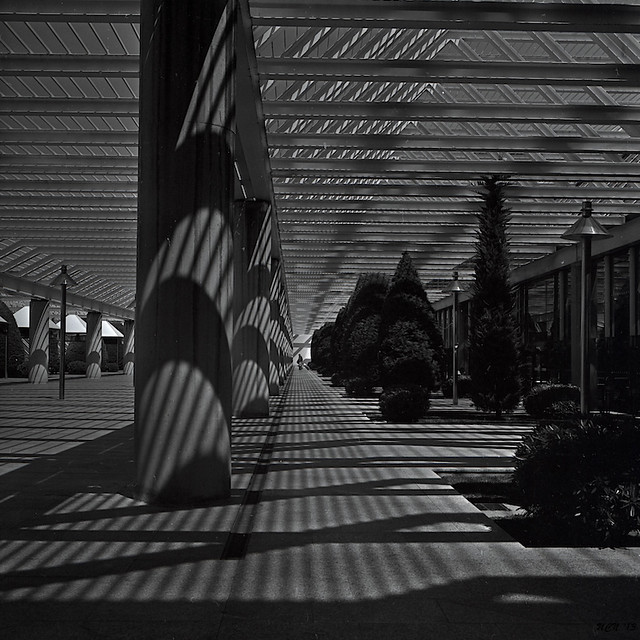 Shadow Lines #2
