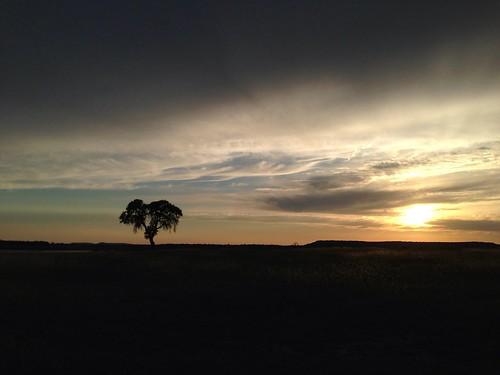 sunset tree nature landscape noedit sunrisesunset pureshot solotree stillhousehollowlake iphoneography danapeakpark uploaded:by=flickrmobile flickriosapp:filter=nofilter