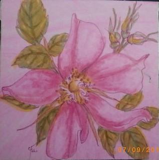 alberta rose art 7