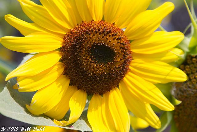 Flora Best 3