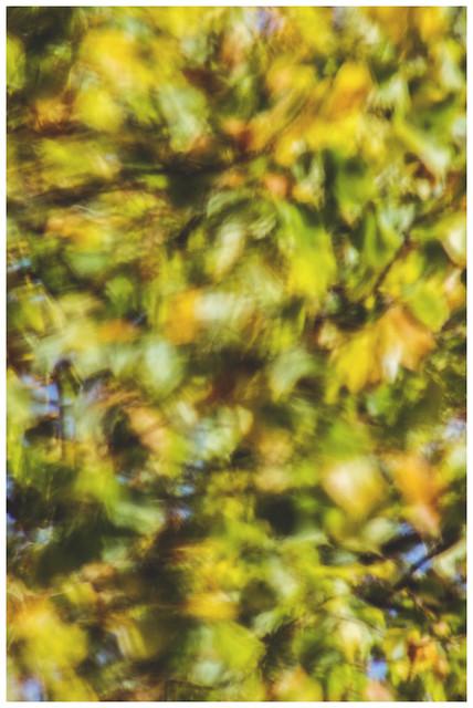 Autumn Patterns II