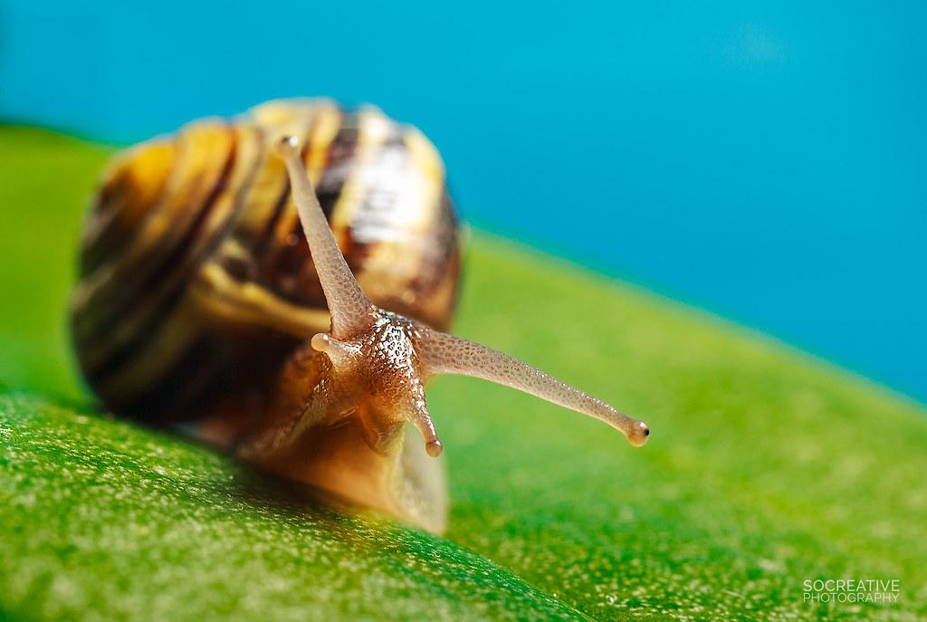 Snail slalom