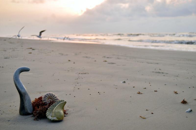 Todo mundo já catou concha na praia, Galveston, 2012. (1)