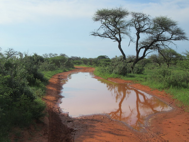 Water on road Mokala National Park South Africa