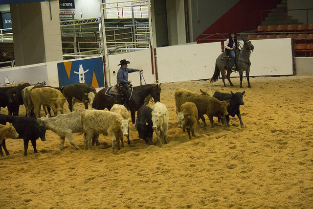 Houston Rodeo_128