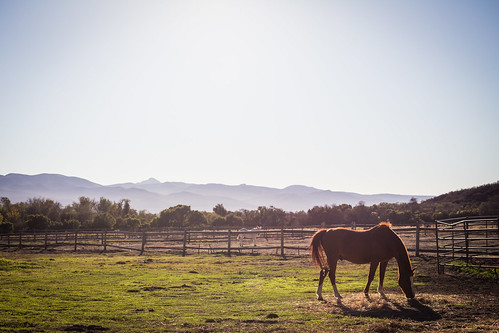 Take two on Horse Grazing in La Purisima Mission | by staticantics