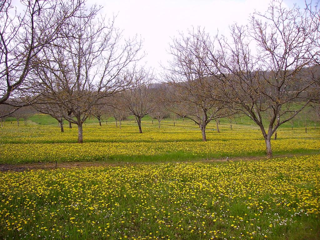 Parterre fleuri, en avril