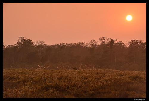 nepal sunset orange sun nature landscape evening nationalpark natural chitwan d800 2014