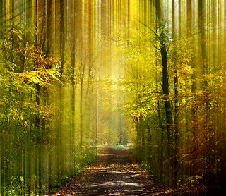 Forest, Poland   by Rogge, Britta