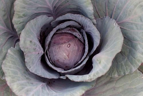 Cabbage Head | by cogdogblog