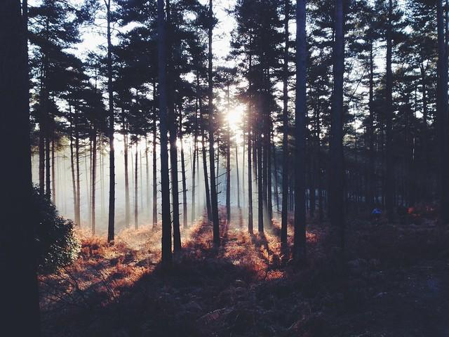 Sunlight through the trees [Explored]