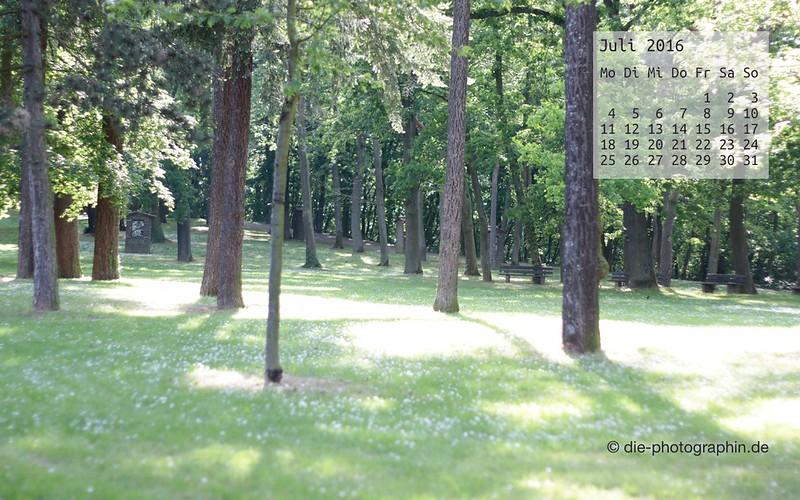 sommerwiese-wald_juli_kalender_die-photographin