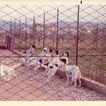 CRISMANI - Un gruppo di giovani maschi nell'ampio recinto a loro riservato.