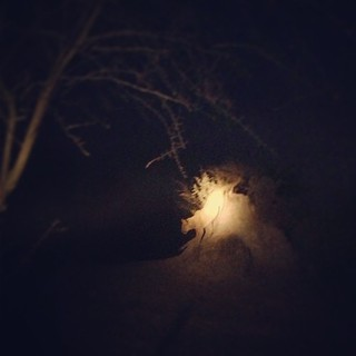 Lion #Botswana #Africa #travel #desert #moon #night #TagsForLikes #TFLers #photooftheday #instagood #bestoftheday #love #safari #instadaily #instagramhub #tbt #follow #cute #iphoneonly #igdaily #instamood #iphonesia #picoftheday #igers #tweegram #beautifu | by Café Africa