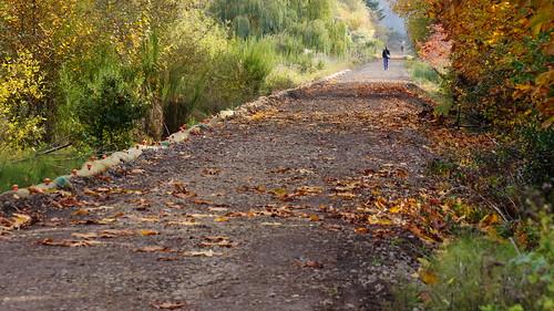 Cross Kirkland Corridor - 15