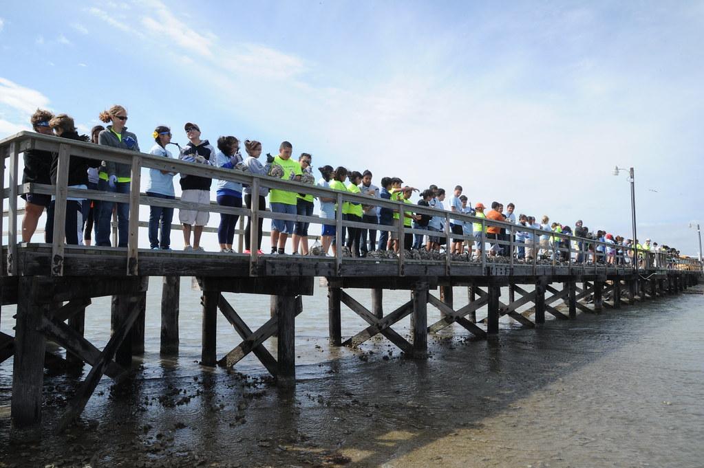 Oyster Reef Restoration