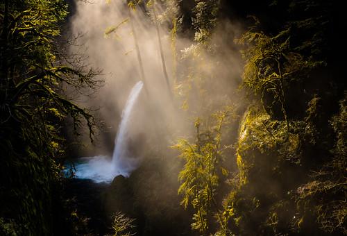 Mirkwood Beckons   by fotostevia