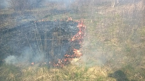 Fire creeps along consuming years of plant litter