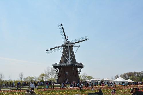 Michigan Tulip Fest | by erikccooper