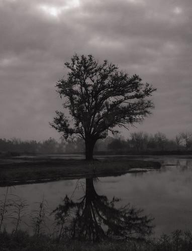 morning blackandwhite bw tree monochrome fog landscape louisiana neworleans efs1855mm explore swamp stcharlesparish bonnetcarréspillway canoneos70d