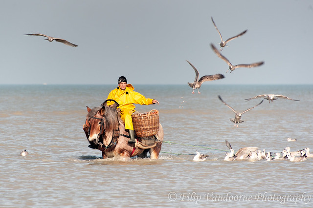 shrimpfisherman on horseback