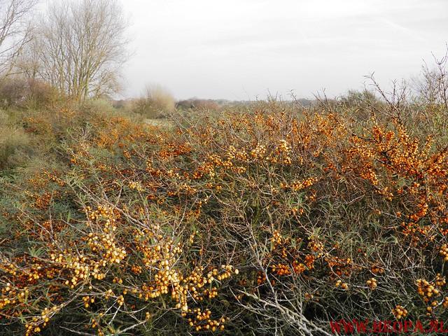 19-11-2011          Wassenaar        25.5  Km  (95)