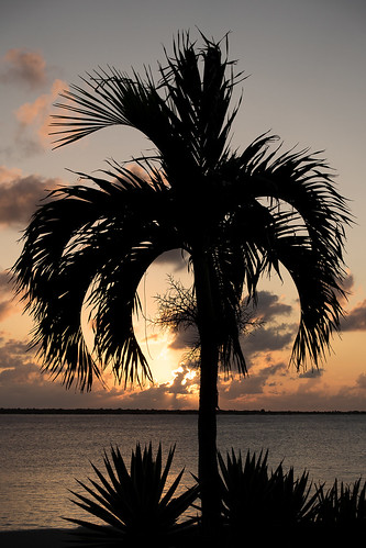 sunset tree silhouette sony palm bonaire captaindonshabitat kralendijk rx100m3