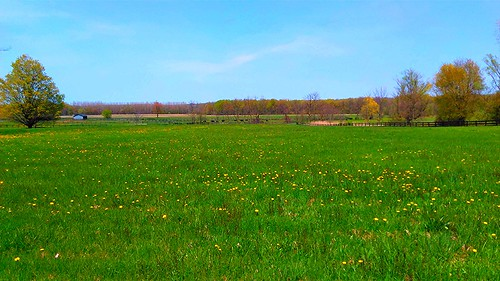 farm fields pasture trees rural android green blue vista horizen sky treeline usa adami michigan westmichigan kentcountymi may spring beautifulearth
