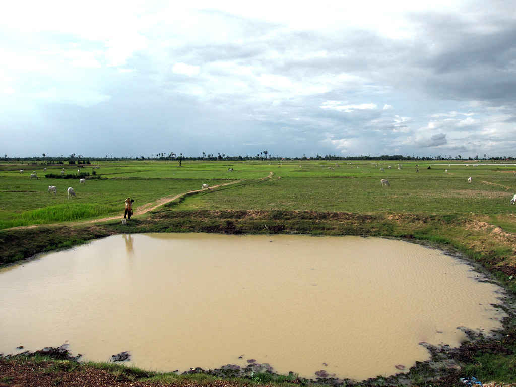 A fish pond in paddy field, Cambodia  Photo by Jharendu Pa
