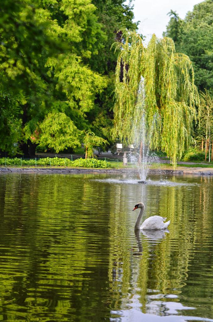Labud u Dunavskom parku