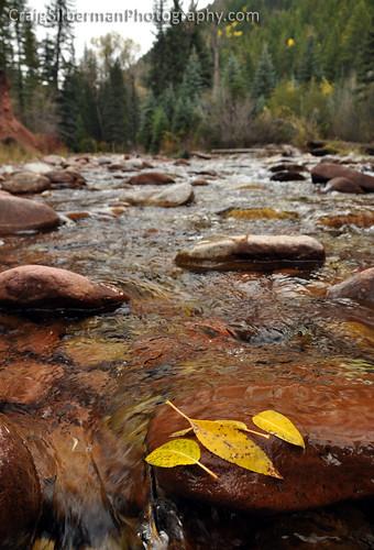 late autumn in Colorado