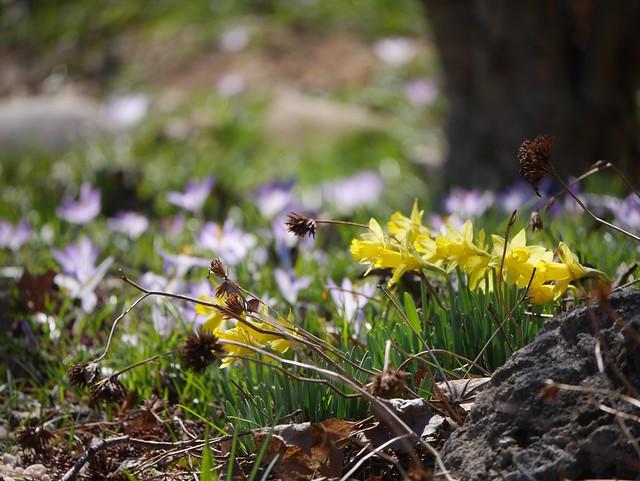火, 2014-04-01 13:53 - Brooklyn Botanic Garden
