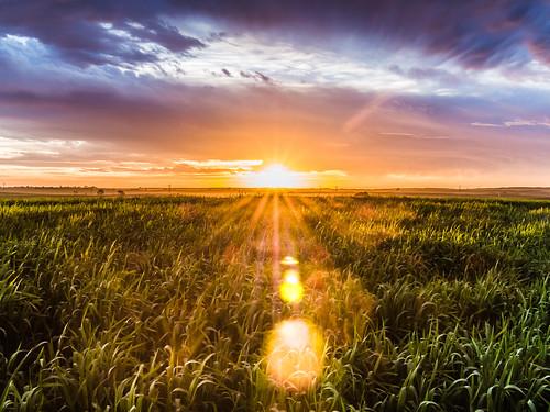 sunset sky sun storm color reflection nature field grass silhouette clouds landscape israel dusk horizon reserve olympus symmetry rays colourful negev pura flair starburst m43 mirrorless microfourthirds olympuspenepl5 panasonic20mmf17ii panasoniclumixg20mmf17iiasph olympusvf4