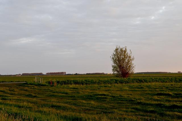 Wilgenboompje in de polder 'Het hoogh hemael,