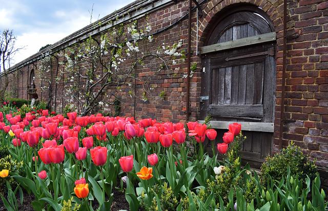 Dunsborough Park - Festival of Tulips