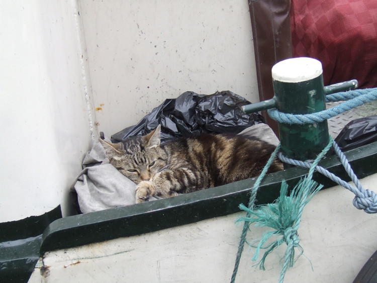 Cat on the Boat Paddington Basin London