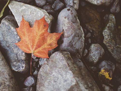 Fall on the Carp