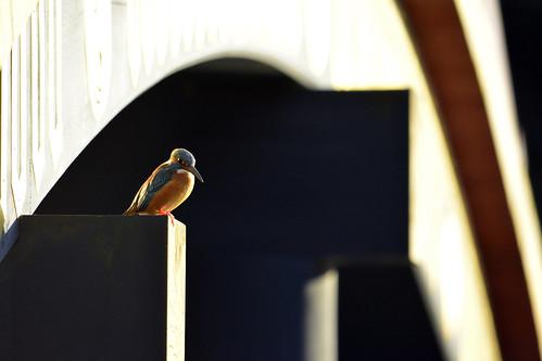 winter sunset japan temple sundown yokohama kanagawa 横浜 archedbridge wildbird 野鳥 カワセミ 称名寺 shoumyoujitemple