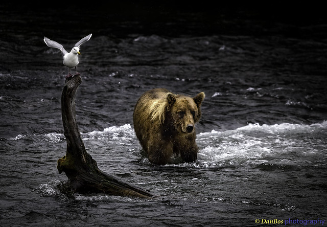 Good Friends - Gull & Bear