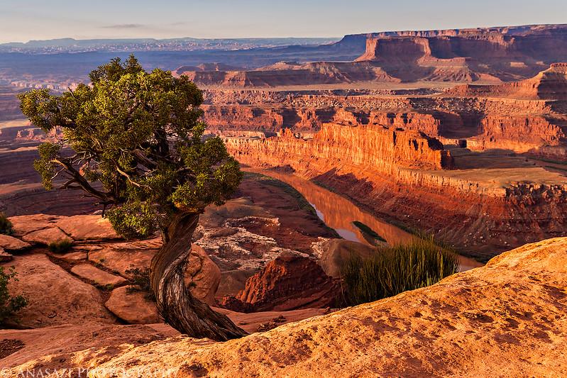 Famous Tree