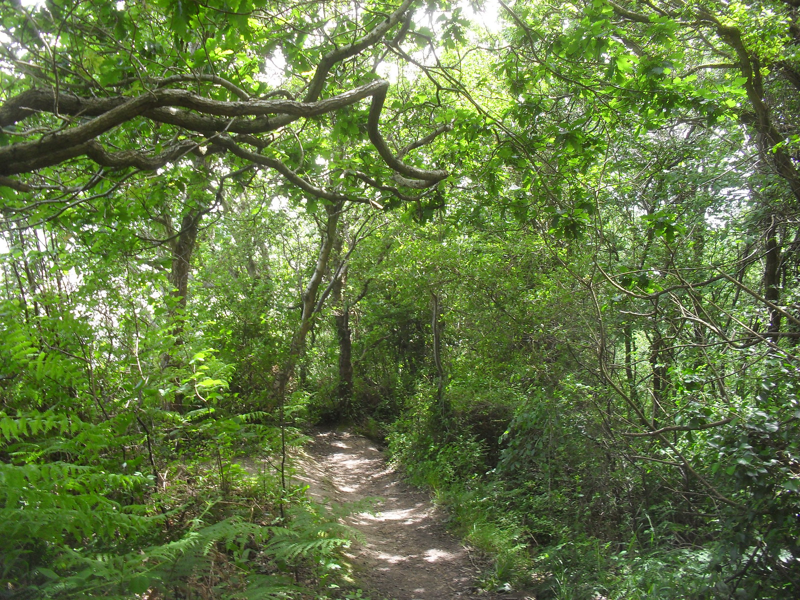 SDC11563 Path down to Fairlight Glen's beach