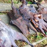 Bush meat in Nigeria