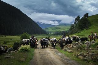 Herders moving home, Yaks crossing road | by Matt Ming