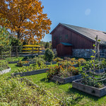 The barn and garden at Avalon