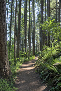 Trail in to Taylor Beach - Devonian Regional Park, Metchosin, BC