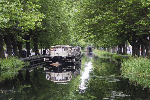 trees light summer dublin water reflections walking boat canal sunday