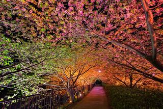 Tunnel of Love   by arcreyes [-ratamahatta-]